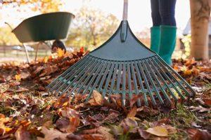 raking-leaves-in-brookfield-illinois-yard