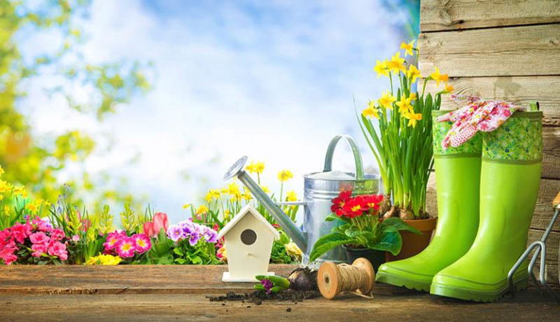Local-Resident-Gardening-in-La-Grange-Iliinois