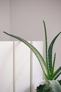 plant health for better skin