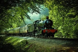 red and black train passing through forest